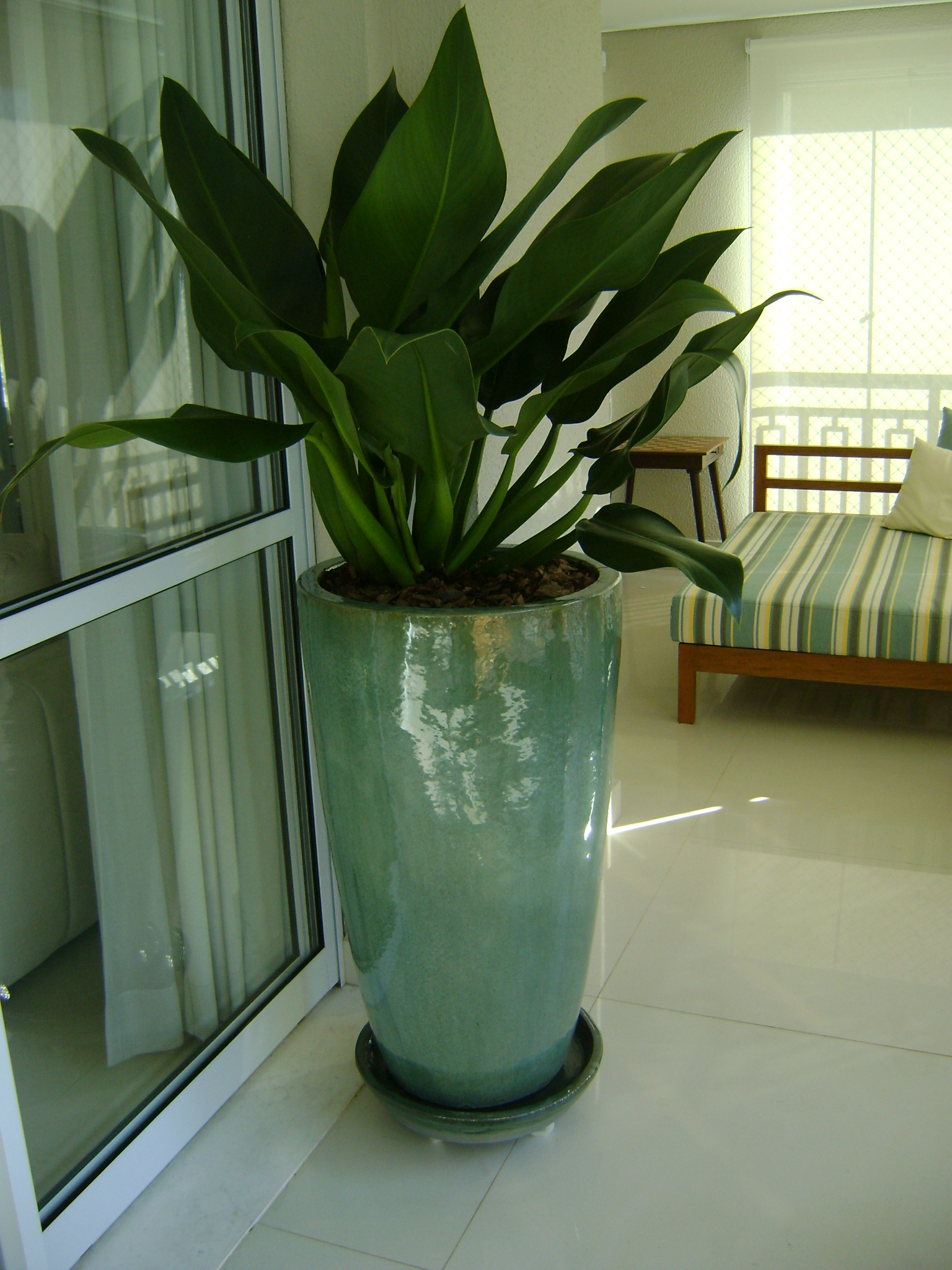 Plantas de interiores arte vegetal for Vaso grande