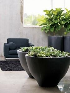 plantas-vaso