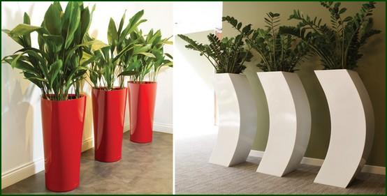 Plantas de interiores arte vegetal - Plantas de interior comprar ...